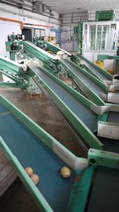 Sortiermaschine für Kartoffel
